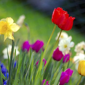 Antonio Vivaldi 4: Spring Music